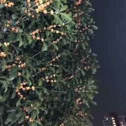 画像 秋の香り の記事より 2つ目