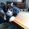 10月17日(日) パネル展示による保護猫❤️譲渡会in上野の画像