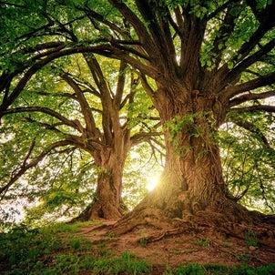 「この木何の木」のハーモニーを変えての画像