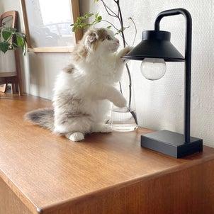 【猫との暮らし】ついに始まってしまいましたの画像