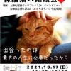 本日です→10月17日(日) パネル展示保護猫❤️譲渡会in上野の画像