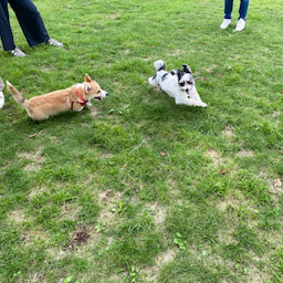 画像 マウントジーンズ那須での飛行犬撮影会で看板犬 の記事より 3つ目