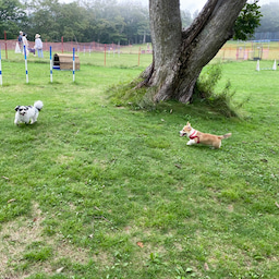 画像 マウントジーンズ那須での飛行犬撮影会で看板犬 の記事より 4つ目