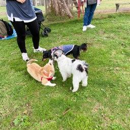画像 マウントジーンズ那須での飛行犬撮影会で看板犬 の記事より 1つ目