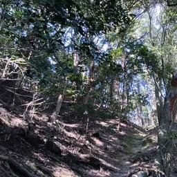 画像 感覚を意識する*日々のわたしと精油*日本の森の精油 の記事より 2つ目