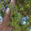 感覚を意識する*日々のわたしと精油*日本の森の精油の画像
