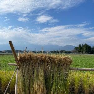 まるたま食堂さんの菰野の田んぼの稲刈りに行ってきました。の画像
