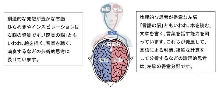 左脳と右脳の交差支配
