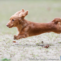 画像 2021/10/2 磐梯スノーDogs 飛行犬撮影会に来てくれたわんこ達 その2 の記事より 2つ目