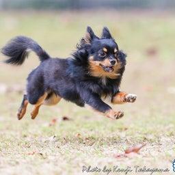 画像 2021/10/2 磐梯スノーDogs 飛行犬撮影会に来てくれたわんこ達 その2 の記事より 3つ目