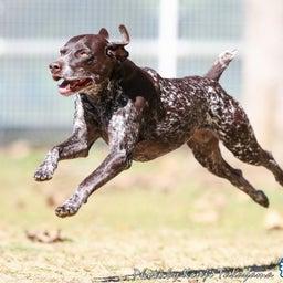 画像 2021/10/2 磐梯スノーDogs 飛行犬撮影会に来てくれたわんこ達 その2 の記事より 1つ目
