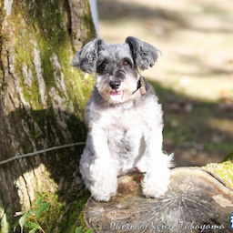 画像 2021/10/2 磐梯スノーDogs 飛行犬撮影会に来てくれたわんこ達 その2 の記事より 8つ目