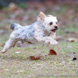 画像 2021/10/2 磐梯スノーDogs 飛行犬撮影会に来てくれたわんこ達 その1 の記事より 7つ目