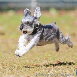 画像 2021/10/2 磐梯スノーDogs 飛行犬撮影会に来てくれたわんこ達 その2 の記事より 7つ目