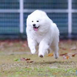 画像 2021/10/2 磐梯スノーDogs 飛行犬撮影会に来てくれたわんこ達 その1 の記事より 2つ目