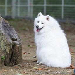 画像 2021/10/2 磐梯スノーDogs 飛行犬撮影会に来てくれたわんこ達 その1 の記事より 3つ目