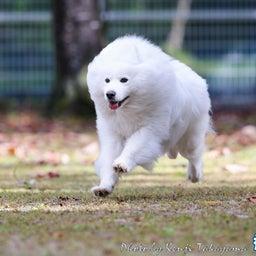 画像 2021/10/2 磐梯スノーDogs 飛行犬撮影会に来てくれたわんこ達 その1 の記事より 1つ目