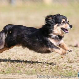 画像 2021/10/2 磐梯スノーDogs 飛行犬撮影会に来てくれたわんこ達 その2 の記事より 9つ目