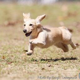 画像 2021/10/2 磐梯スノーDogs 飛行犬撮影会に来てくれたわんこ達 その1 の記事より 11つ目