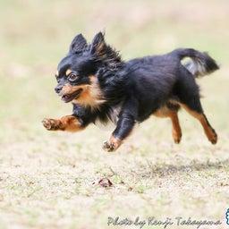画像 2021/10/2 磐梯スノーDogs 飛行犬撮影会に来てくれたわんこ達 その2 の記事より 4つ目