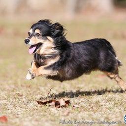 画像 2021/10/2 磐梯スノーDogs 飛行犬撮影会に来てくれたわんこ達 その2 の記事より 10つ目