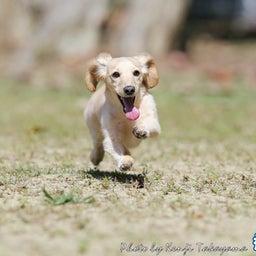 画像 2021/10/2 磐梯スノーDogs 飛行犬撮影会に来てくれたわんこ達 その1 の記事より 12つ目