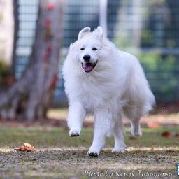 画像 2021/10/2 磐梯スノーDogs 飛行犬撮影会に来てくれたわんこ達 その1 の記事より 4つ目