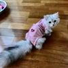 ネコのいる生活 エリザベスなワタシの画像
