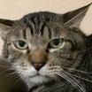 日曜日は譲渡会!保護猫を家族に迎えるには??