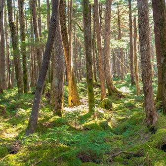 八千穂高原② 苔の森