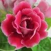 セッションレポ【花色数秘セラピー】とBASEキャンペーンの画像