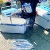 10月14日(木)太刀魚便釣果詳細