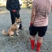 キターの成長 訓練所で学ぶこと・・・ 仮免・卒犬への想い・・・
