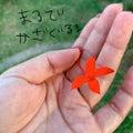 元バスガイドきいちゃんのちょっときいて♡とっておき沖縄