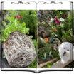 ビオパン植える時に気をつけること★花壇にビオラを植え付け&Vログ風動画