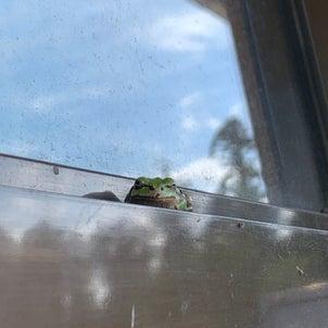 玄関に常駐するカエルの画像