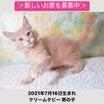 募集中のメインクーン♡子猫