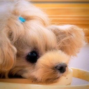 bebe&coco  (ღ*ˇ ˇ*)。o♡  100万回…愛してるの画像