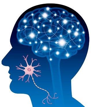 脳神経・シナプス
