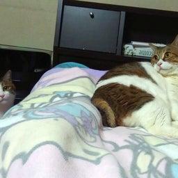 画像 マンガ:ババ抜き♡はちくまの寝床♡『ニッターズハイ!』 の記事より 5つ目