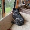 番犬観察日記の画像