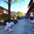 ご近所の宿場町「海野宿」お散歩したよ