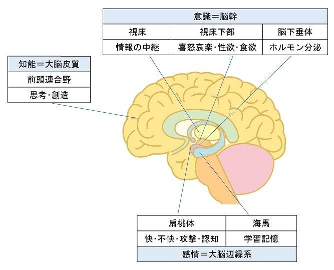 心を司る脳の連携