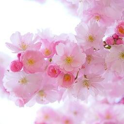 画像 【セッションレポ】花色数秘セラピー の記事より 2つ目
