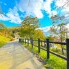 秋の北海道 支笏湖のヒメマス 銀座のママ今週のパワースポットの画像