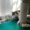 退院と今日はフラフープの日と隠れ家の猫たち