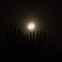 画像 「Fingerprint File」今夜は十三夜 欠けた月を楽しむ日本独自の風習 の記事より 3つ目