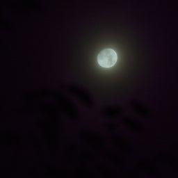 画像 「Fingerprint File」今夜は十三夜 欠けた月を楽しむ日本独自の風習 の記事より 1つ目