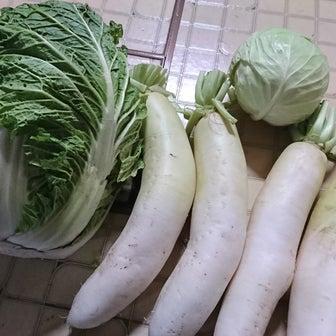 頂き運 ⑨ 大根と白菜