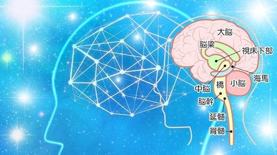 海馬・大脳皮質・記憶